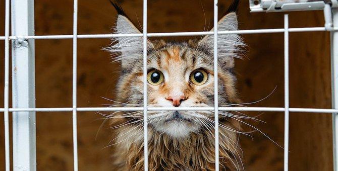 ペットホテルに預けられた猫の心理5選!ストレスになっているって本当?