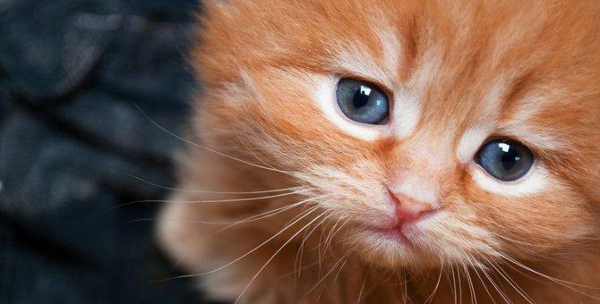 猫が『寂しかったニャ〜』と伝えているときのサイン5つ