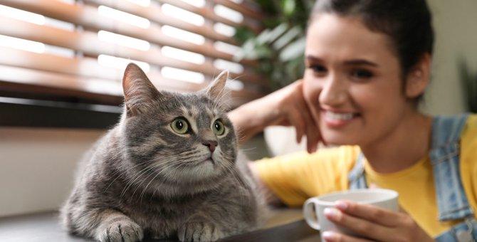 猫が『自分の名前』をわかっているか確かめる方法4つ!覚えてもらうためにすべきことは?