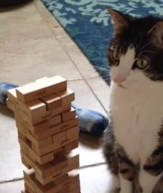 強引なのになぜか倒れない!上手にジェンガを楽しむ猫ちゃん