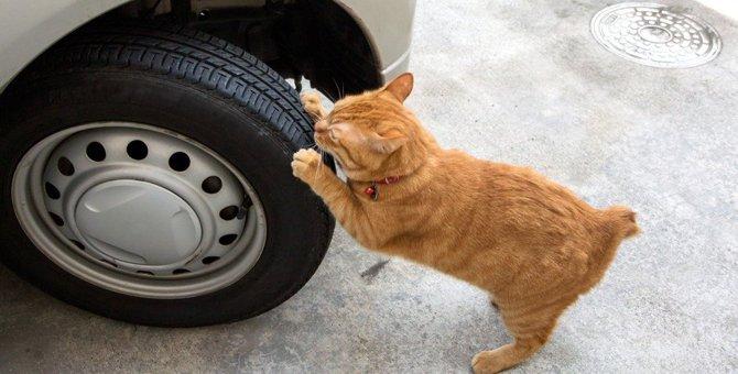猫のマーキングとは?する理由、やめさせる方法など