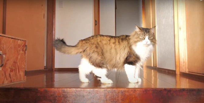 日の当たるところに猫ちゃんの姿あり?!朝日を浴びて清々しい1日の始まり♡