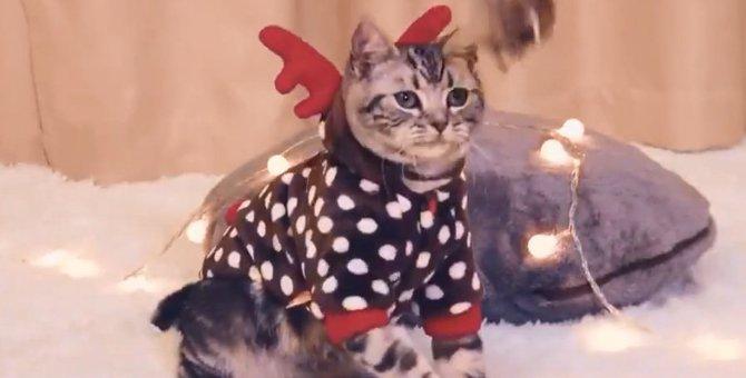 もうすぐクリスマス♡猫ちゃんトナカイがやってきた!