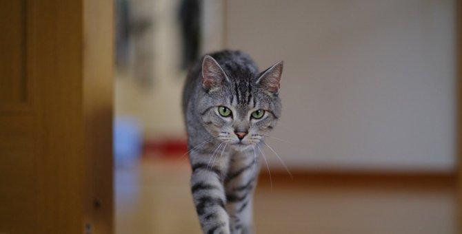 猫が『ふらふら』歩いている時に考えられる原因や対処法4つ