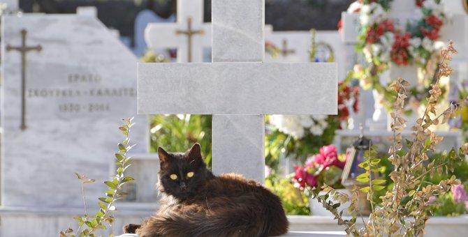 猫の葬儀の仕方とは?花の準備や服装から費用まで