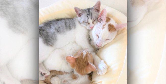 多頭飼育崩壊レスキューのイクメン猫と風邪でボロボロの野良猫が親友に