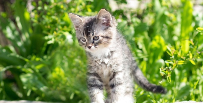 猫を拾ったらどうする?初めて飼う人が注意すべき4つの項目