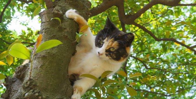 <猫と人の共生の為に 地域猫活動を知ってください> 殺処分ではなく、人道的に猫を減らす方法が地域猫活動です。