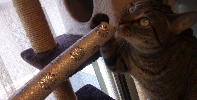 猫との新しい遊び方♡クリッカートレーニングをやってみた