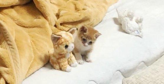 """""""ぬいぐるみに寄り添う子猫""""で話題!ハッピー過ぎるその後とは?"""