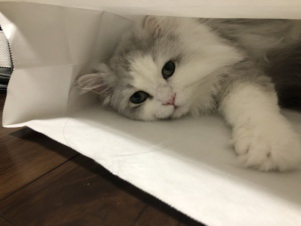 猫と一緒に暮らすと得られるメリット6つ