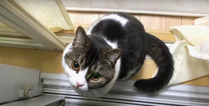 『捕まえるにゃ!』網戸にいる獲物を狙う可愛い猫さん