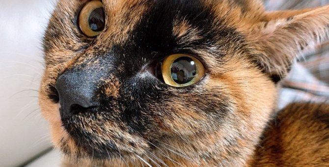 猫が『もっとして欲しいニャ♡』と思っていること5選