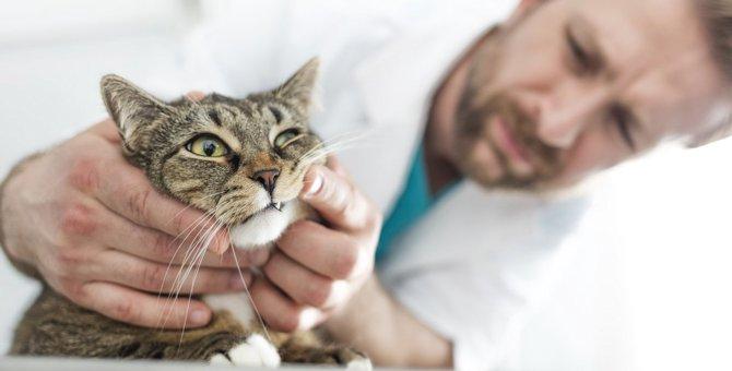 猫の『歯ぎしり』は危険!絶対放置しちゃダメな理由2つと対処法