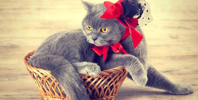 猫モチーフのアクセサリーが可愛い!大人気「にゃん雑貨」特集!