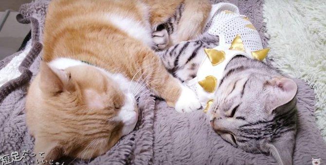 くっついて寝ると暖かいね♪向かい合って寝ちゃった猫さんたち♡