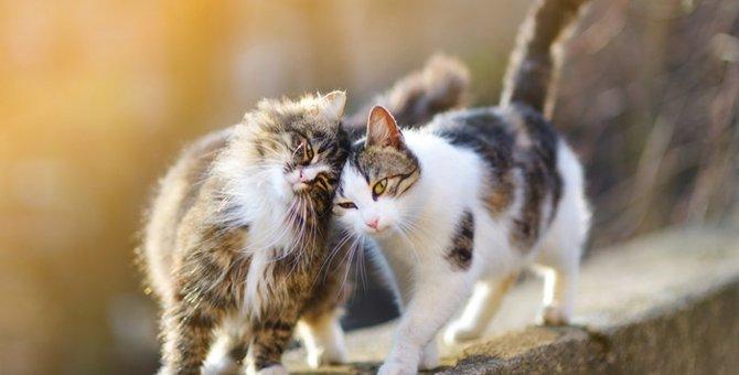猫を多頭飼いをすると良い点と気をつけるべき点
