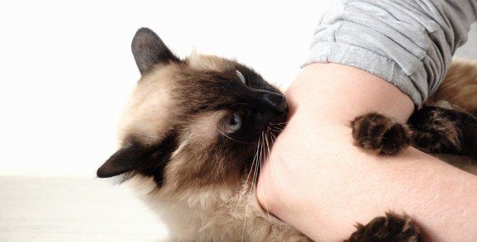 猫が噛み付く5つの理由!その気持ちとしつけの方法