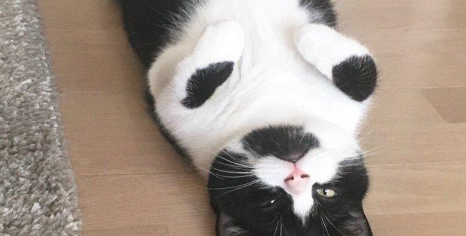 何故そこで!?猫がお部屋や通路の真ん中で眠る心理