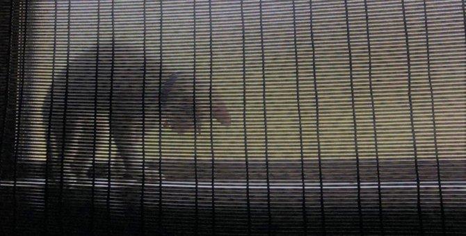 LAYLAの12猫占い【8/24~8/30】のあなたと猫ちゃんの運勢