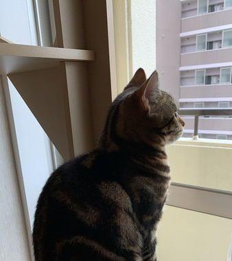 猫って「猫背」なの?