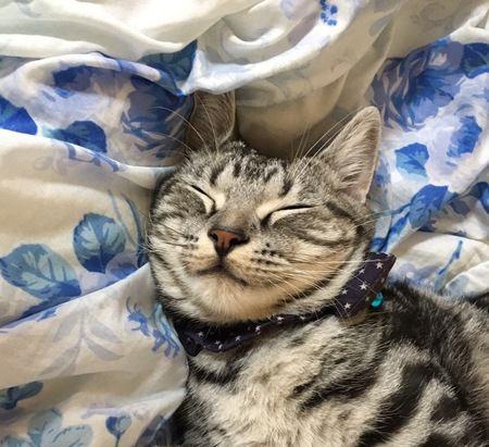 猫と一緒に寝るときに思わずしたくなること4選