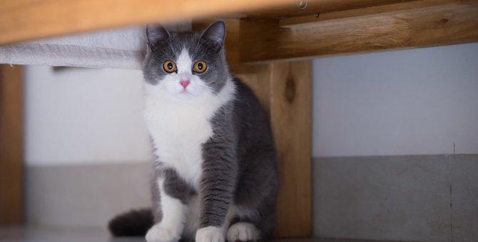猫の居場所の作り方は?簡単に作れる方法をご紹介します!
