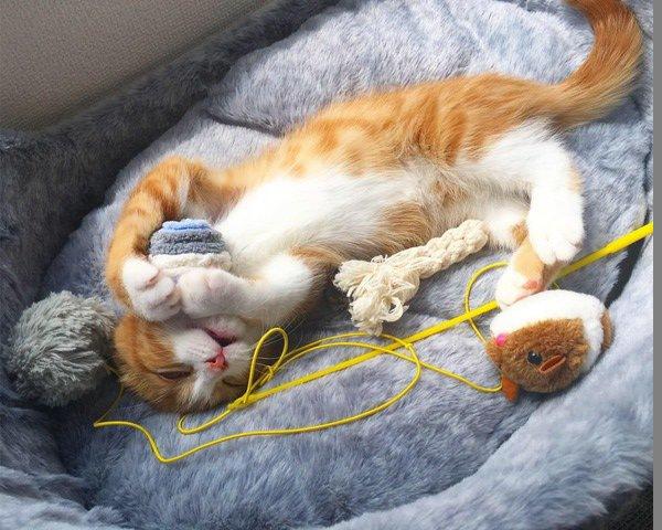 猫がすぐ寝っ転がる7つの理由