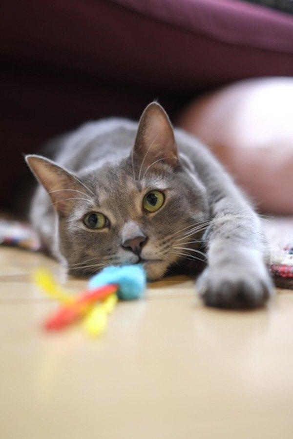嫌がらせ?!猫が苦手なのに好かれる人の特徴4つ