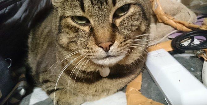 愛猫のマーキングに困ったら…対策のポイント3つ