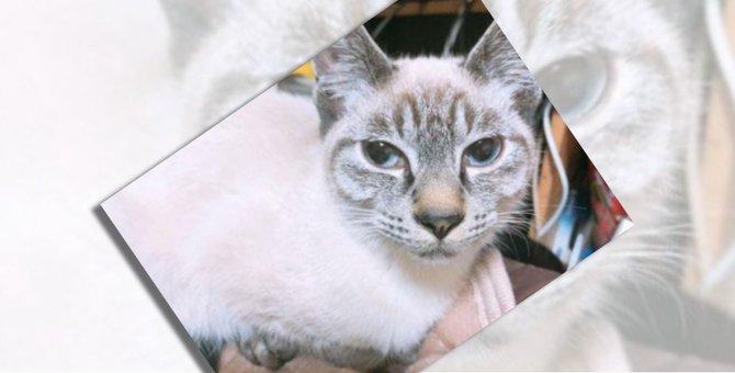 多頭飼育崩壊の家からやってきた猫シャルル。迎え入れから現在までの軌跡