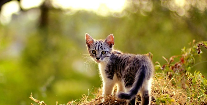 猫の帰巣本能についての実験とメカニズム