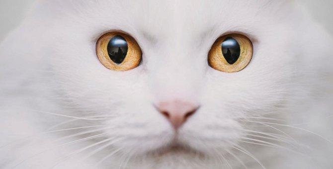猫がまばたきをする時の気持ち
