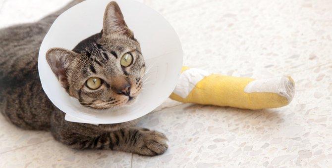 猫が捻挫をしている時にみせる症状や治療の期間と料金