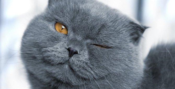 『猫が教えてくれた』と感じること3選
