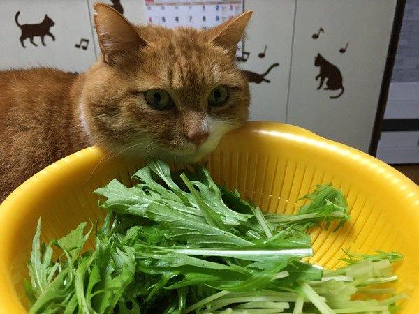 猫が人間の食べ物を欲しがる理由3つ