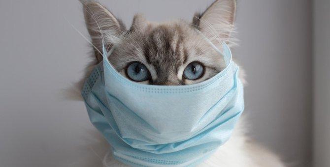 猫のいる家で『アルコール消毒液』を使用する際の注意ポイント3つ