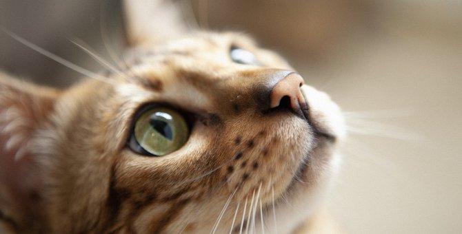 猫はなんで『鼻をヒクヒク』するの?知られざる2つのワケと注意点を解説!