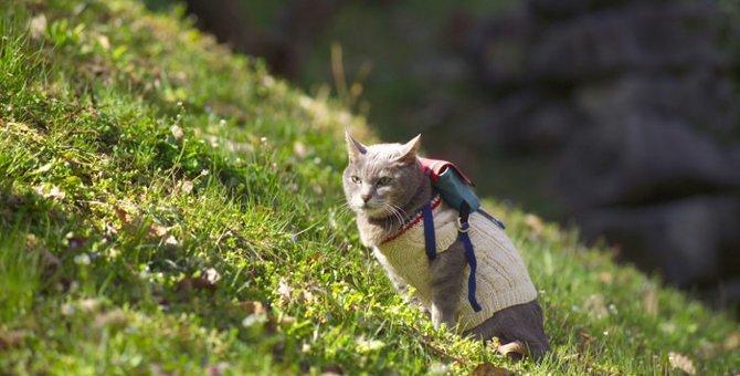 猫リュックの選び方とおすすめ商品