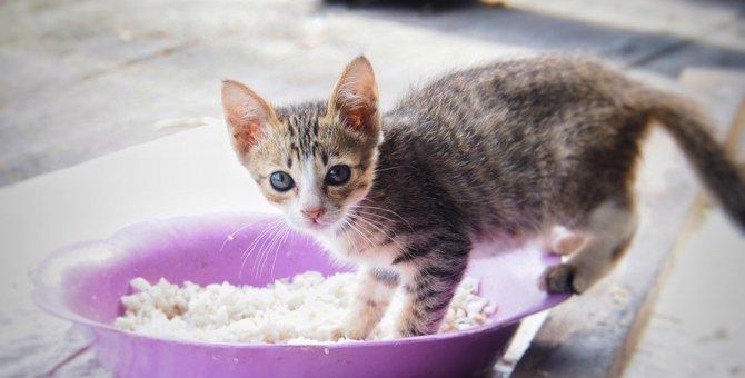 猫に一日二食が良い理由とは?