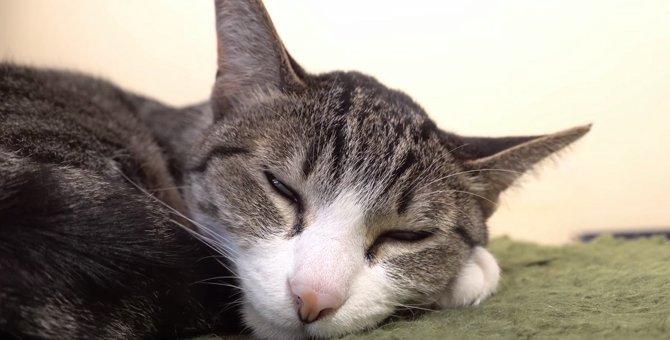 今白目だったかニャ?カメラの前で眠るレム睡眠中の猫ちゃん