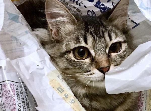 『好奇心旺盛な猫』がよくしている行動4つ
