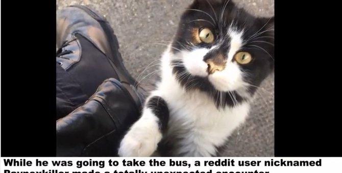 バス停に住みついた猫ちゃん、抱っこをせがんでみんなを癒す