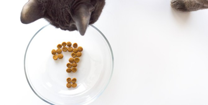 猫が『1日に必要なご飯の量』は?食事管理のポイントを解説!