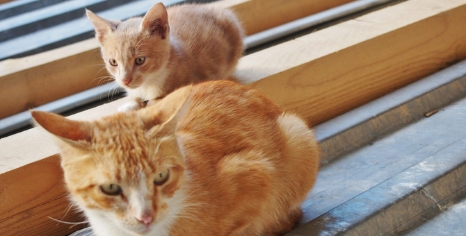 母猫の妊娠から出産までの過程と注意点