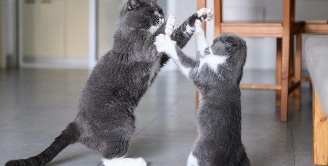 「猫は好戦的」ってただのイメージ?攻撃してくる理由2つと対処法
