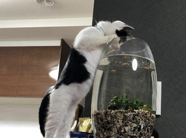 猫がやっちゃいけないと知っている7つの事