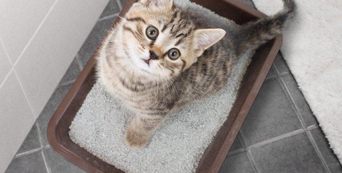 猫が『うんち』を隠す3つの理由