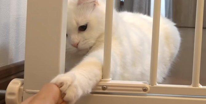 脱走防止ゲートを設置!果たして、白猫ポムさんの反応は?