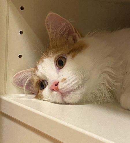 猫ががっかりする期待はずれなこと5つ